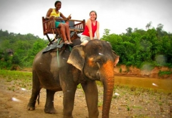 Living With Elephants in Laos